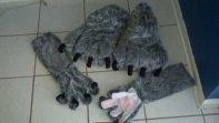wolf feet